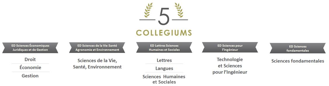 5 collegiums